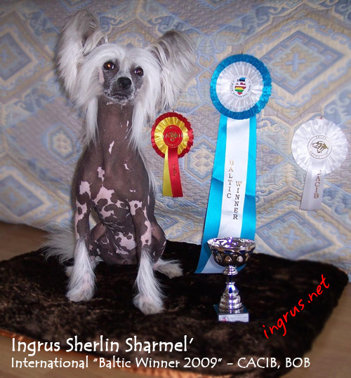 INTERNATIONAL DOGSHOW Baltic Winner 2009
