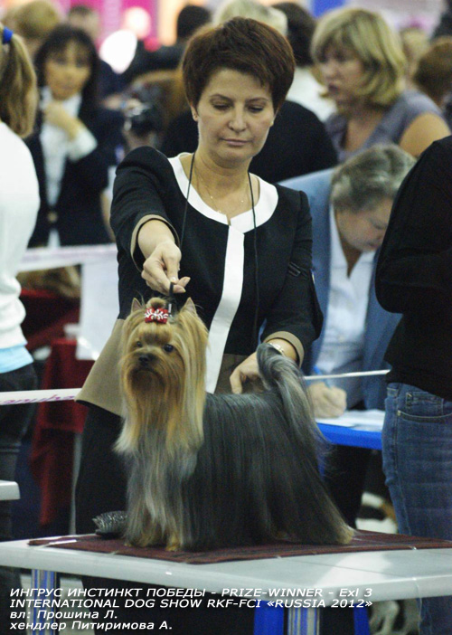 INTERNATIONAL DOG SHOW RKF-FCI «RUSSIA 2012»