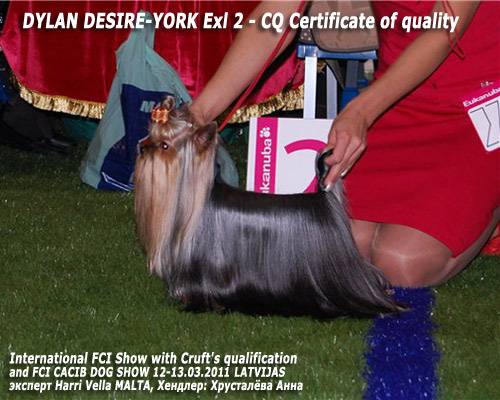 International FCI Show with Cruft's qualification LATVIAN WINNER 2011