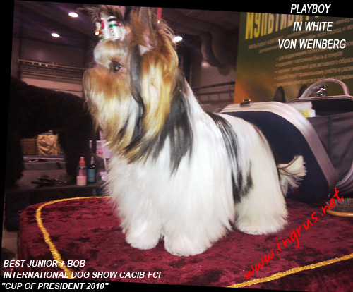 2 x INTERNATIONAL DOG SHOW CACIB-FCI 04-05.12-2010