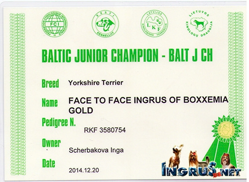 FACE TO FACE INGRUS OF BOXXEMIA GOLD